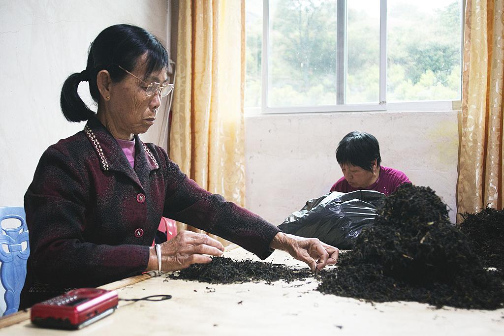 Отбор элитного чая Дань Цун